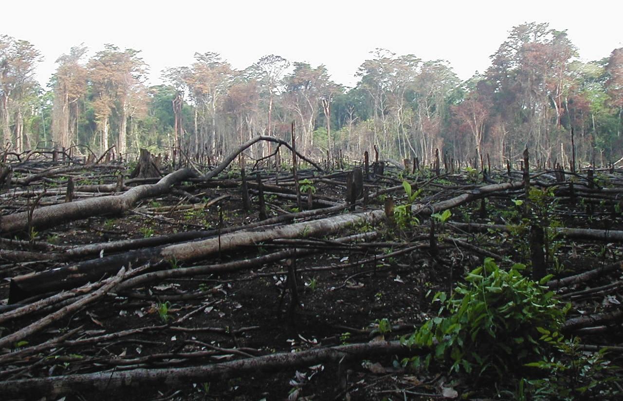 Devastated forest landscape after crop burning